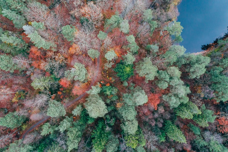 Birds-eye perspective on forest